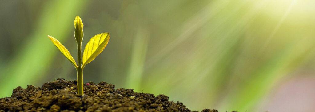 Jungpflanze INKoh Gartenerde